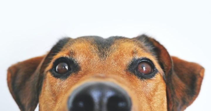 Todo lo que debes saber para comprar un  ahuyentador de perros