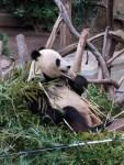 南加洲自由行(二)- 聖地牙哥動物園 San Diego Zoo