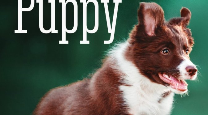 The Perfect Puppy – Gwen Bailey