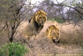 leoes 2