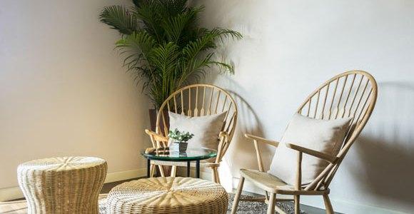 Conheça as plantas que podem melhorar o ar da casa