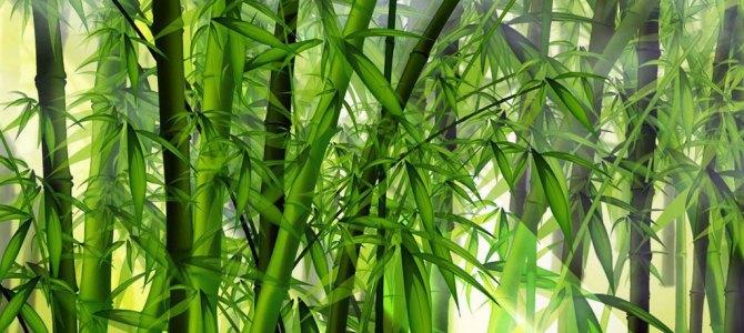 O bambu chinês e o carvalho