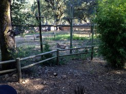 Safari West (117)