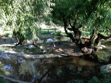 Safari West (129)