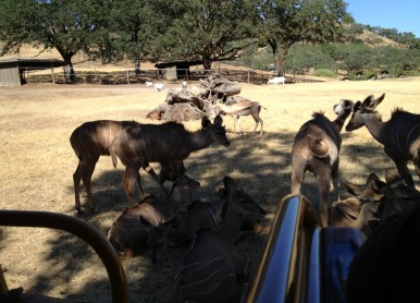 Safari West (13)
