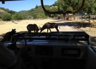 Safari West (18)