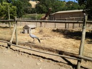 Safari West (22)