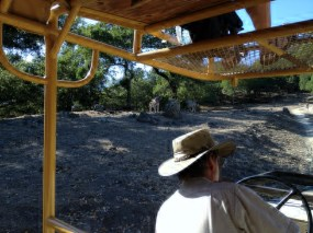 Safari West (75)