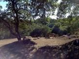 Safari West (89)