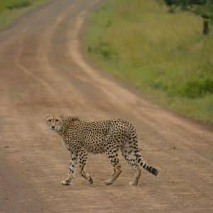 animaux safari sauvage Afrique