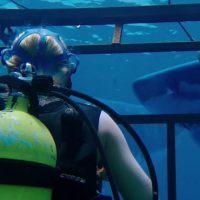 47 Meters down: série-B aux dents aiguisées