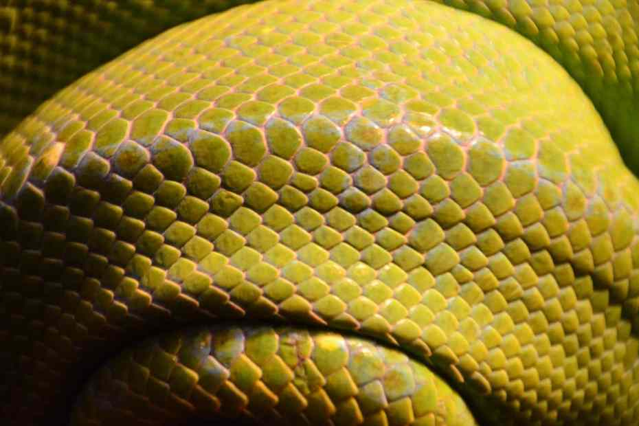 closeup of a green snake's body