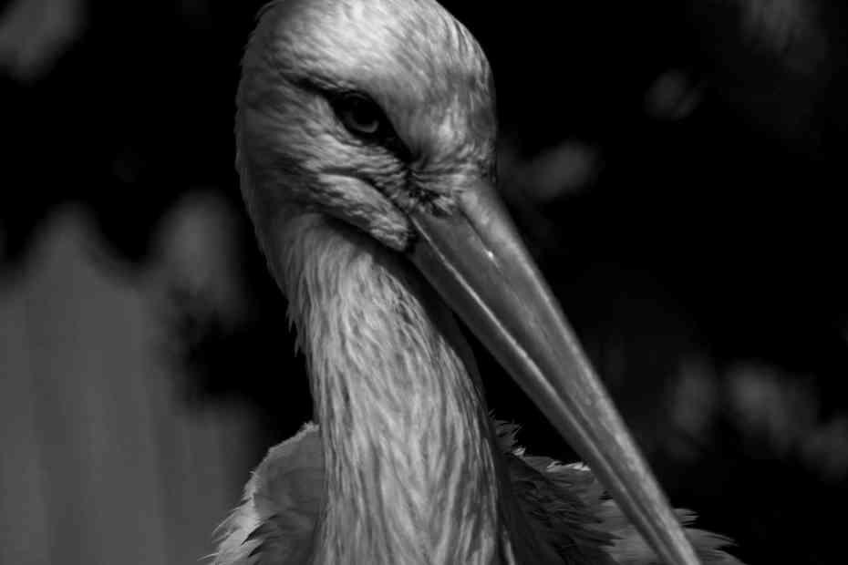 Stork - Sophia Adamowicz