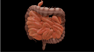part of the gut