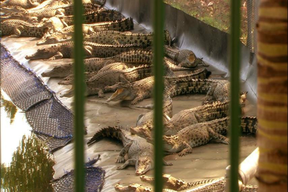 2. Black Water, croc farm