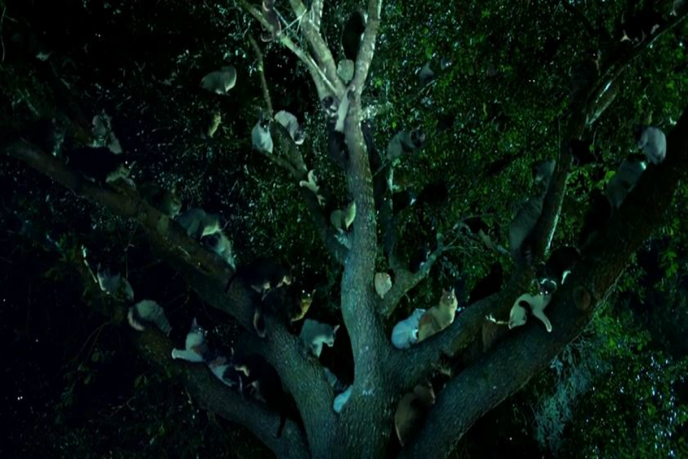 4. Zoo, cats in tree, ep. 2