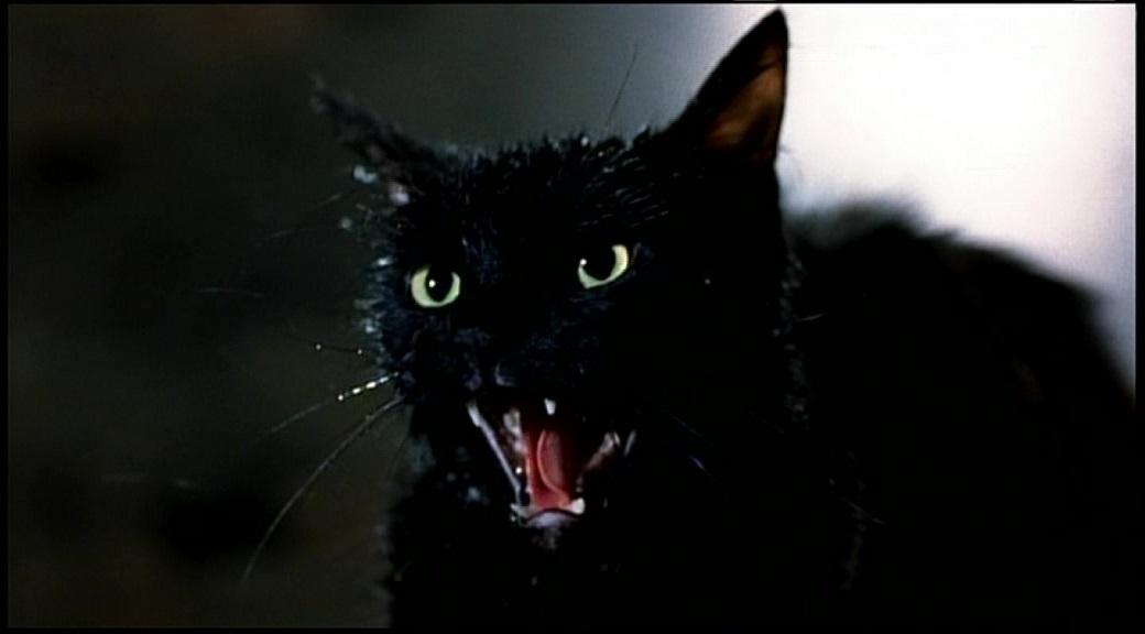 Il gatto dall'inferno