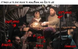 5_zed to life