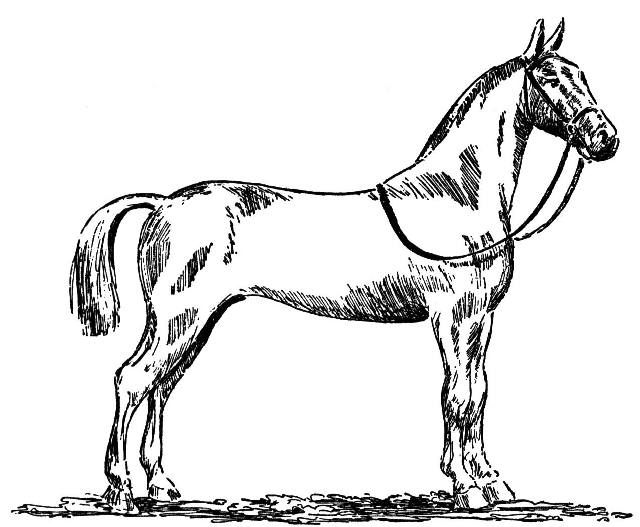 quarter horse head coloring page horse coloring pages animal jr