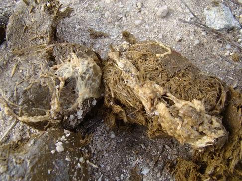 Mucus recouvrant du crottin.