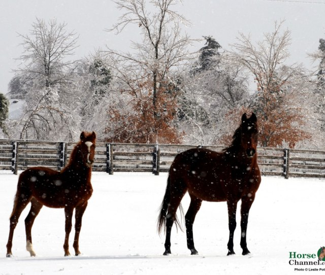 Winter Equine Screensaver And Wallpapers