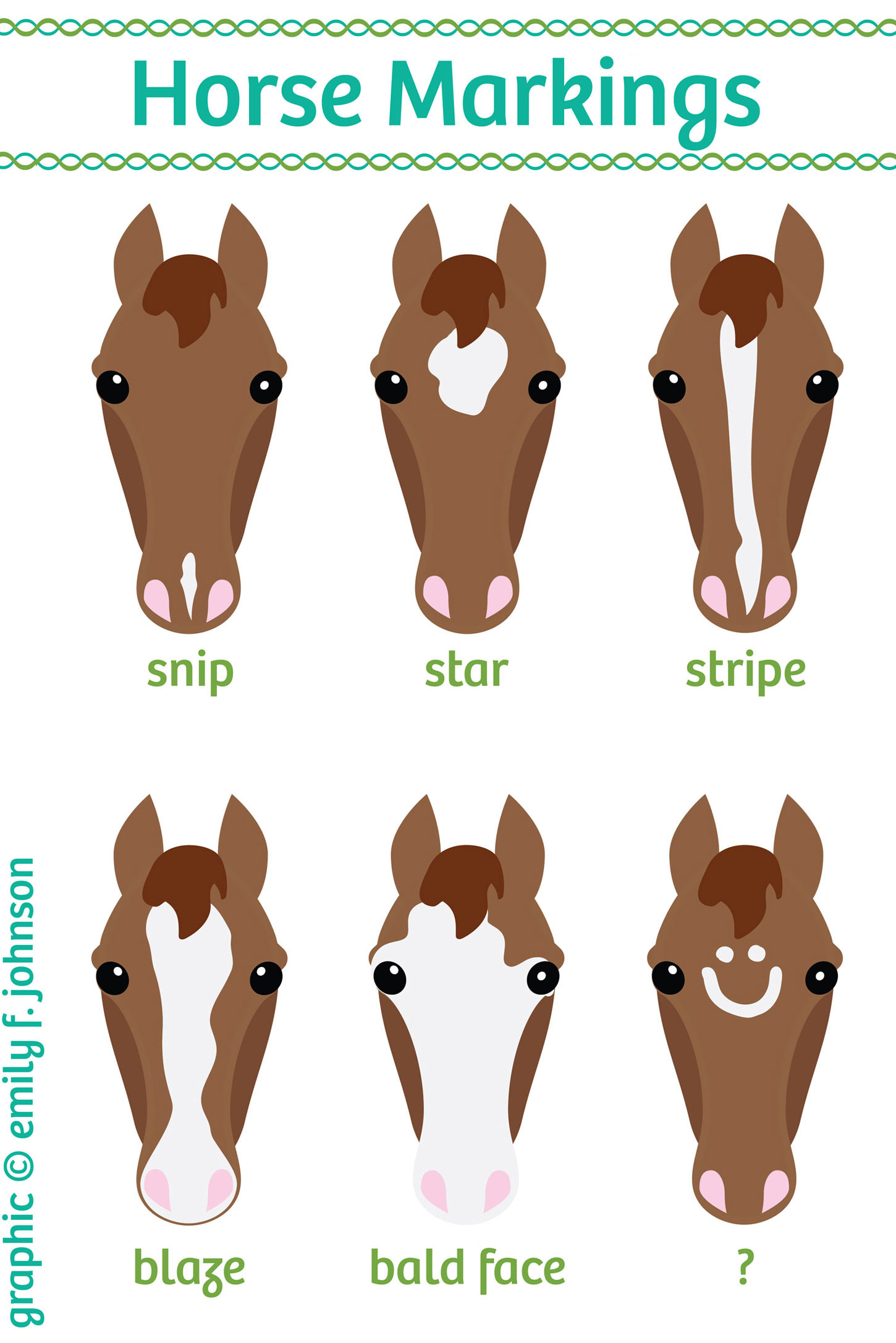 Chart Equine Face And Leg Markings