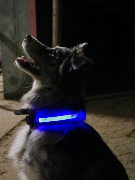 Led hondenhalsband hondenverlichting.
