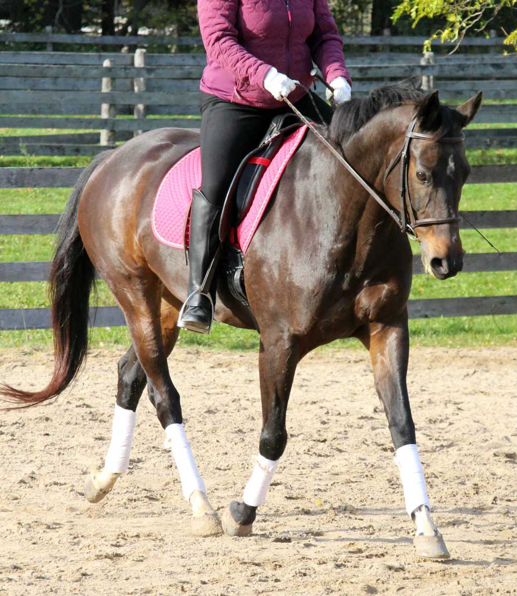 Top 10 Ways to Reinforce Your Horse's Correct Responses