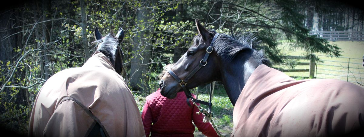 7 Ways to Listen to Your Horse