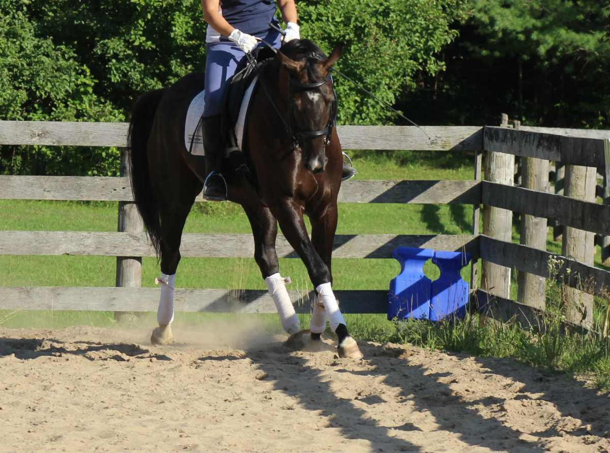 Two Secrets to Easing Your Horse Into Suppleness
