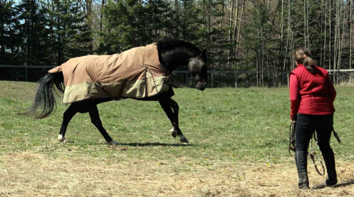 42 Ways to Play, Learn and Grow With Your Horse