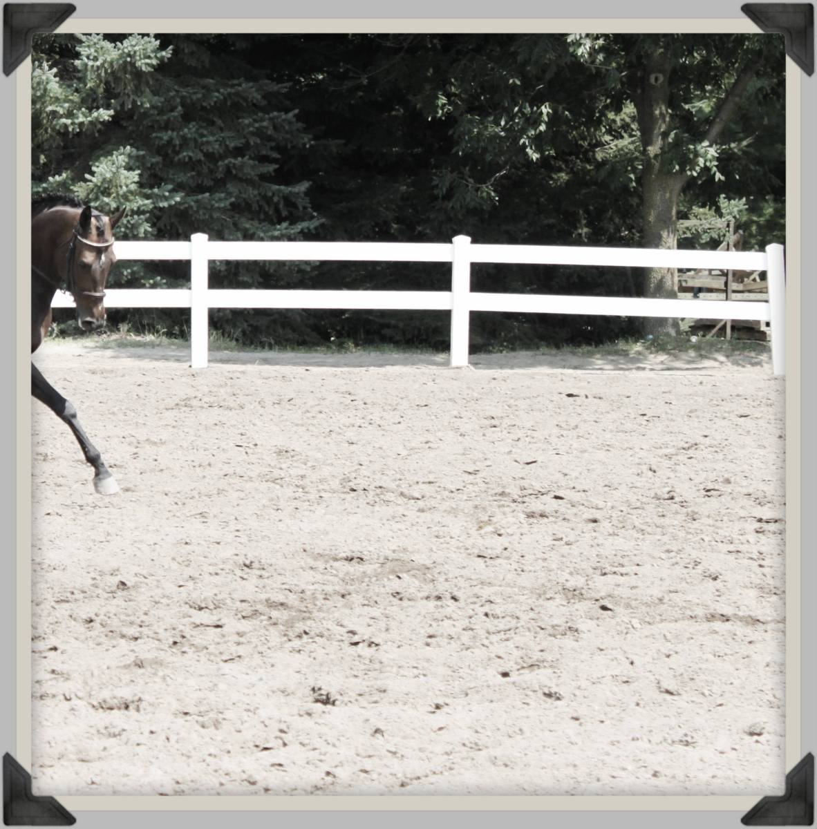 When Good Riding Instruction Becomes Great