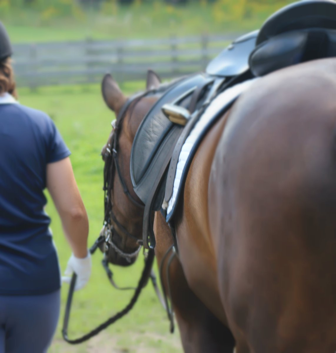 20 Signs That Your Horse Benefits From Your Riding
