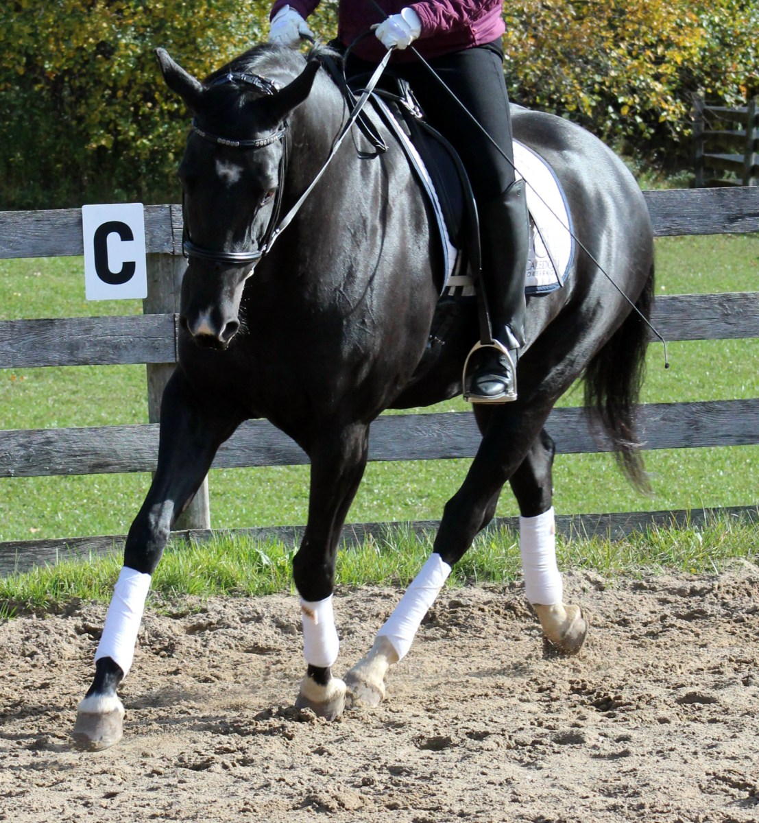 """The #1 Rider Problem Of The Year: Pulling To €�frame"""" A Horse €� Horse  Listening"""