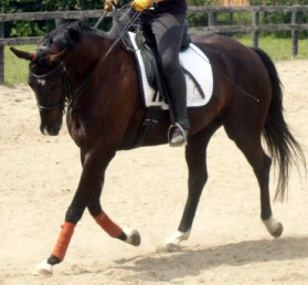 Why Interrupting A Horse's Stride Might Be Just the Ticket for Better Balance