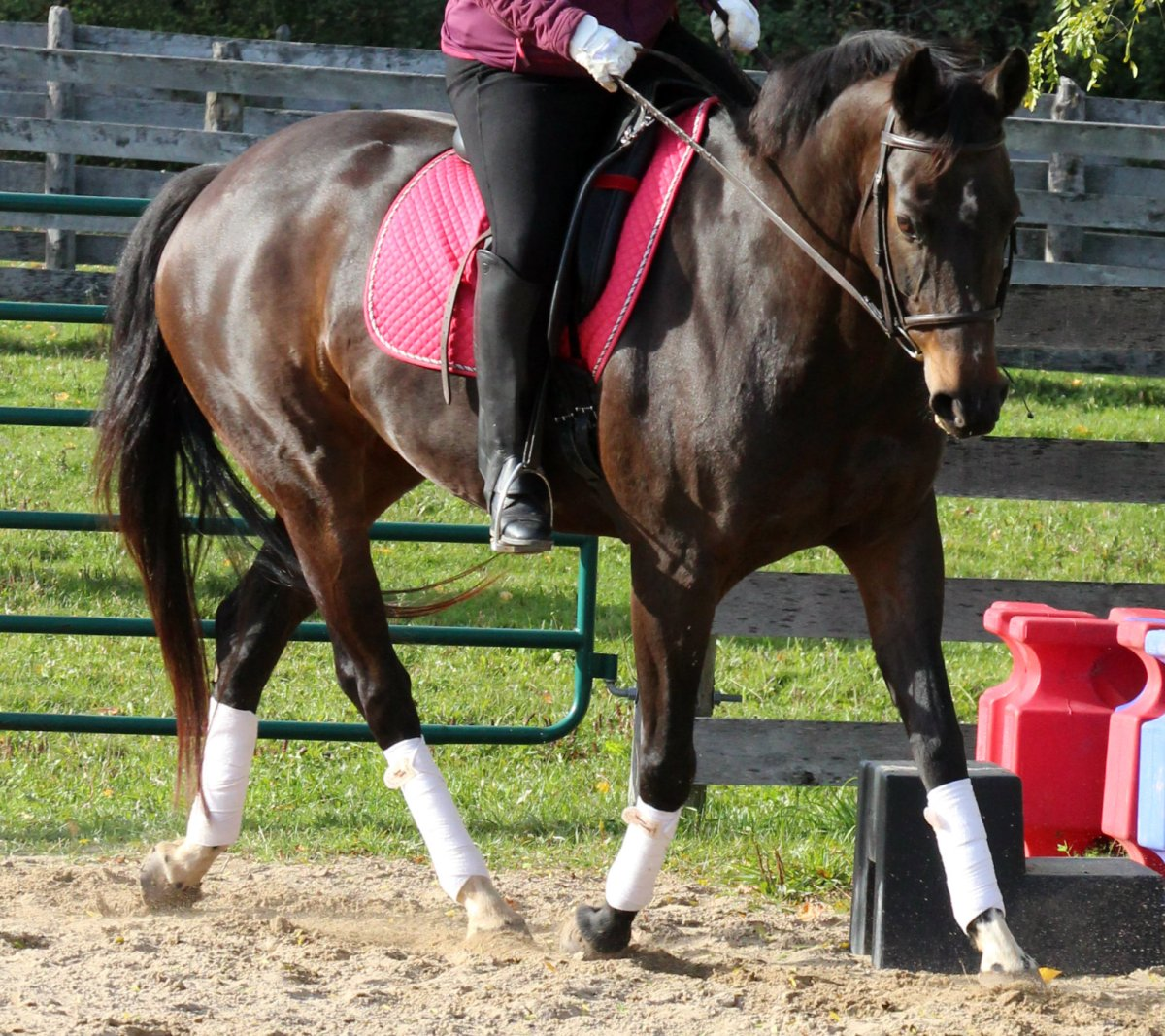 """Three Steps To """"Brilliance"""" In Horse Riding"""