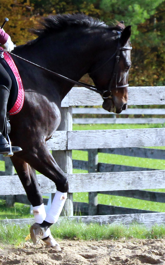 "Five Steps To Transforming Your Horse's ""Give To The Bit"""
