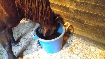 geriatric horse feed
