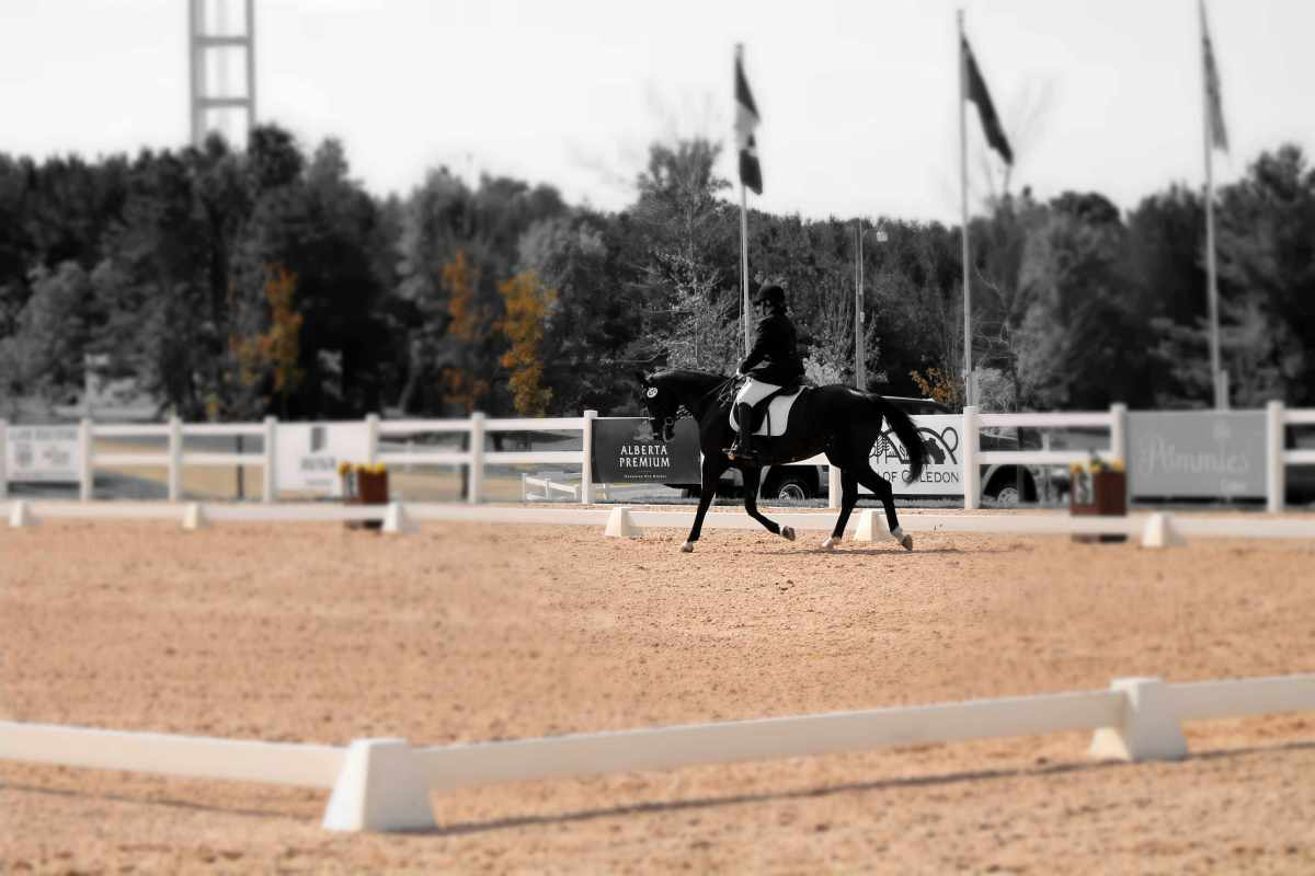 Why Boring Is Beautiful In Horseback Riding
