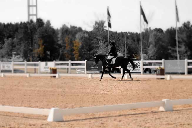 why boring is beautiful horseback riding