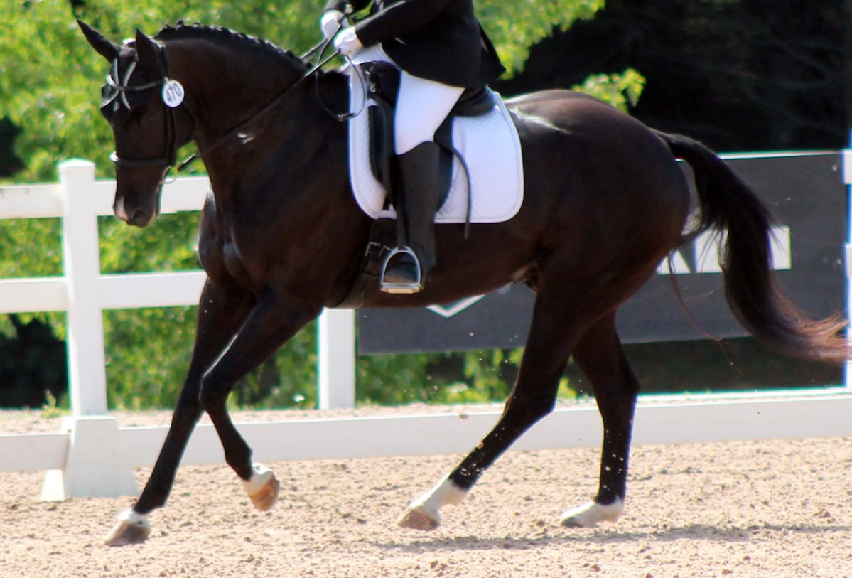 Crystal Clear About Canter Leads and a Quick Fix