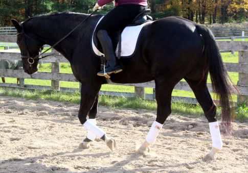 walk horse riding