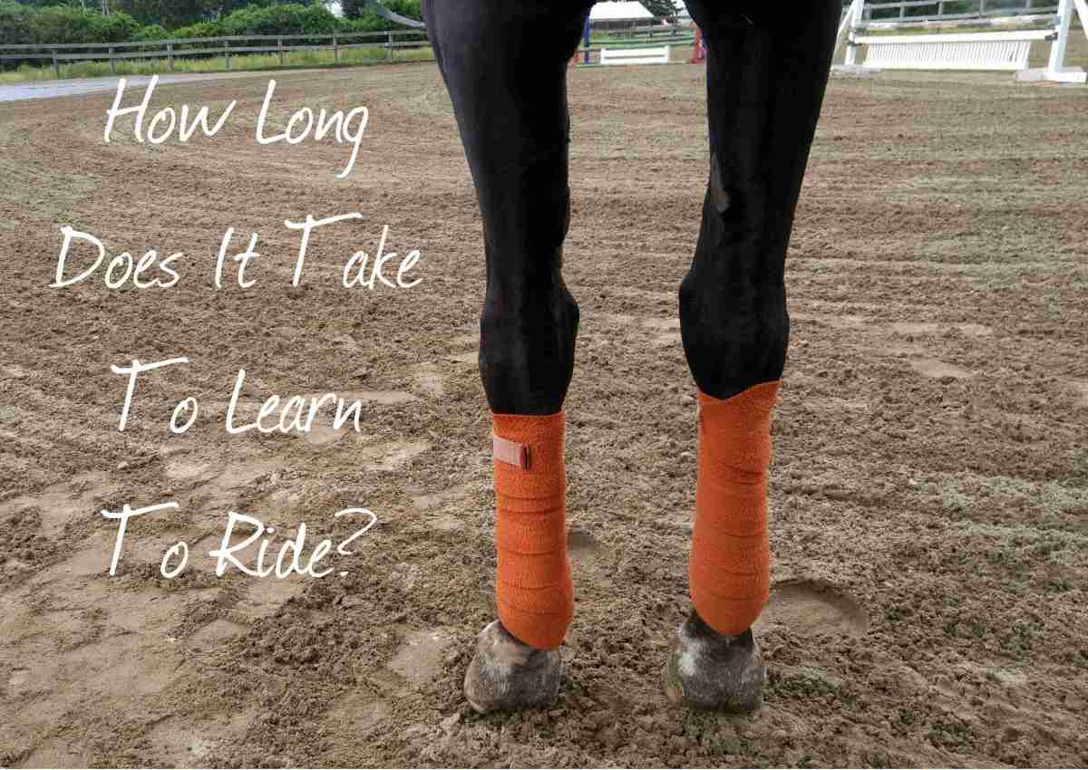 12 Riding Quick Tips - #9: How Long Does It Take To Learn To Ride A Horse?