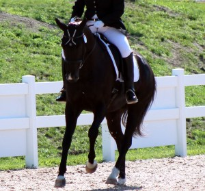 Succeed At The Horse Show Horse Listening
