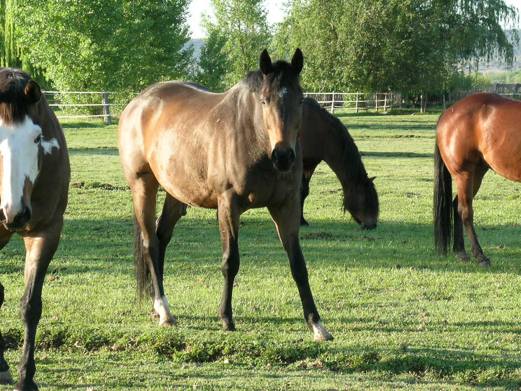 Horselogs Horse Management Software Free Printable Horse Record Pages For Your Barn