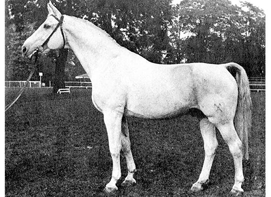 Image result for gotthard stallion