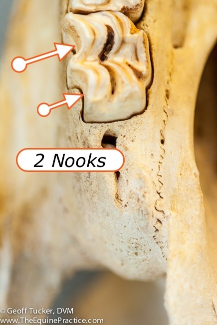 Annotated_nooks-9857