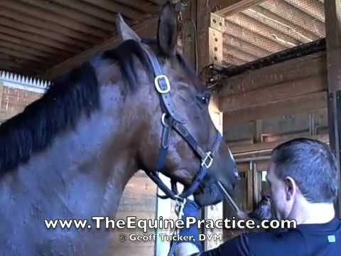 "Geoff Tucker, DVM and Horsemanship Dentistry™ - ""The Lower Arcade"" - video 3 of 8"
