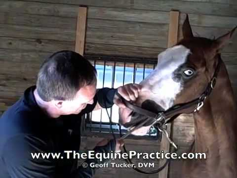 "Geoff Tucker, DVM and Horsemanship Dentistry™ - ""The Back Uppers"" - video 6 of 8"