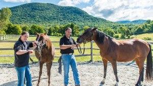 Horsemanship Dentistry, The Equine Practice Inc